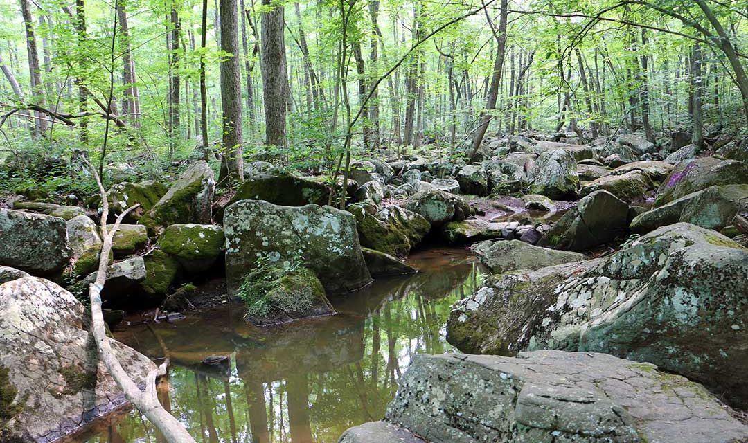 French Creek State Park | Turtle & Horseshoe Trails